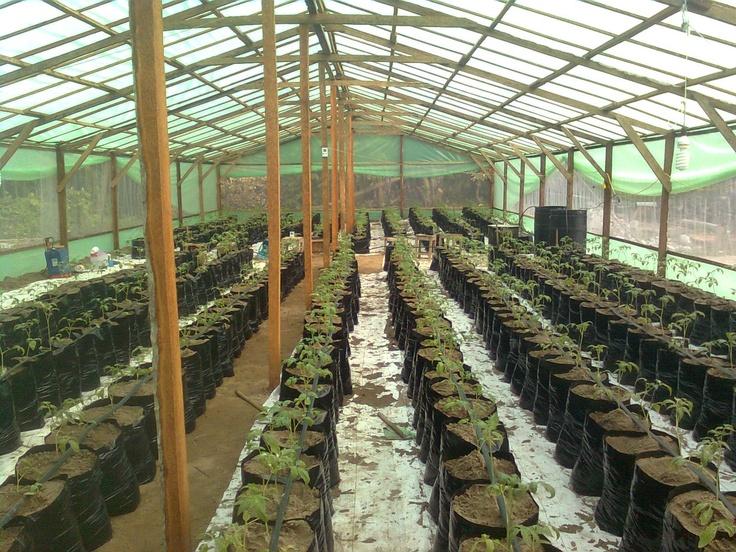 invernadero tomate rio grande comalcalco Tabasco