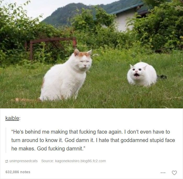 Best Cats Images On Pinterest Cat Stuff Funny Animals And On - 20 cat posts on tumblr that are impossible not to laugh at