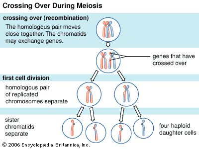 the evolution of the human kind and the early gene detection The sry gene provides instructions for making a protein  sry and human sex  wallis mc, marshall graves ja mammalian sex--origin and evolution of the y.