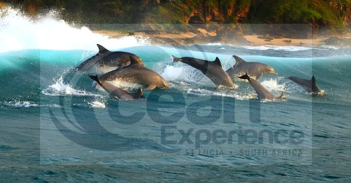 Whale and Dolphin Watching with Ocean Experience St Lucia iSimangaliso Wetland Park