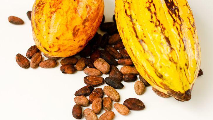 Mlsání kakaových bobů dodá energii i dobrou náladu