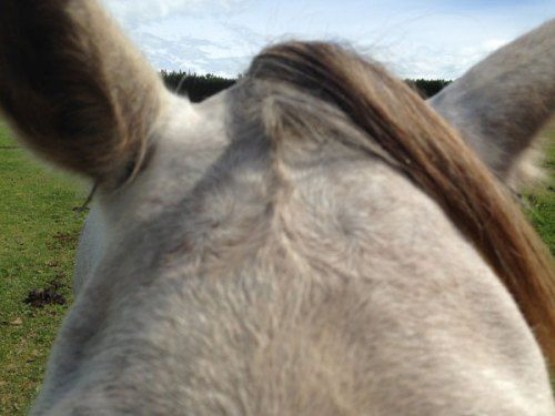 Is there a relationship between facial hair whorl characteristics and behavioural responses to a fearful stimulus in horses?