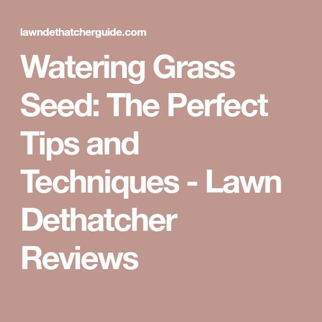 Watering Grass Seed: The Perfect Tips and Techniques - Lawn Dethatcher Reviews
