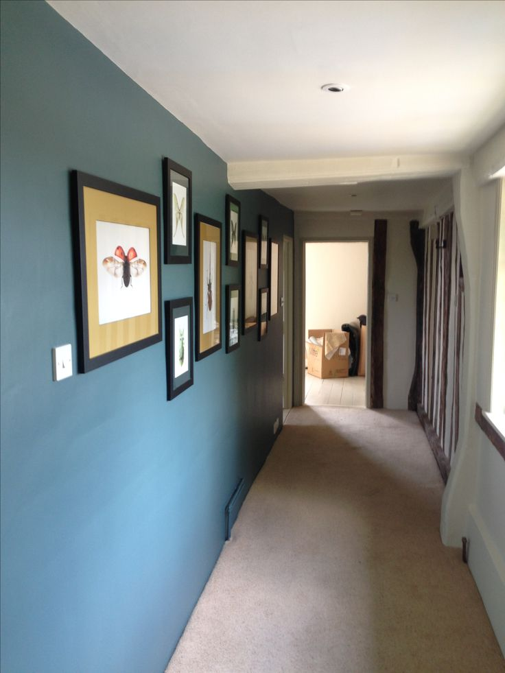 Farrow & Ball Inchyra Blue wall with bespoke framed bug prints with gold and green mounts
