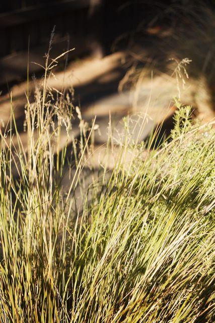 Beautiful shadows, movement and golden hues in a Yarraville garden.   Design by Caroline Hyett Gardens & Design