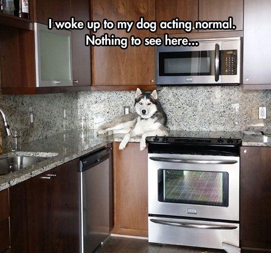 Keep Walking Human, HA Huskies...
