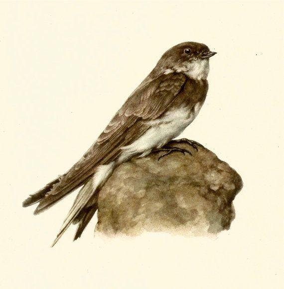 VINTAGE BIRD ILLUSTRATION Sand Martin Bird Print Lodge and Country Home Decor Vintage Animal Wall Art (faf 56)