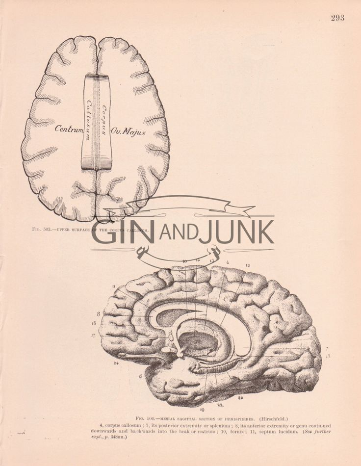 87 best anatomy prints images on pinterest med school medical and antique diagram of various aspects of the human brain from 1898 hemispheres anatomy print ccuart Image collections