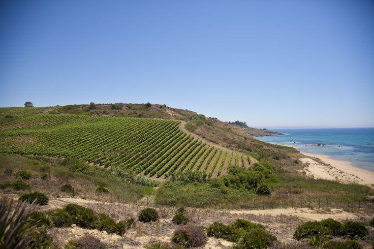 Settesoli Vineyard #Vine #Settesoli #Sea #Menfi