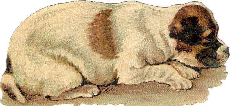 Oblaten Glanzbild scrap die cut chromo Hund 12cm dog chien | eBay: