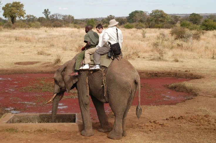 Elephant Back ride, Zimbabwe