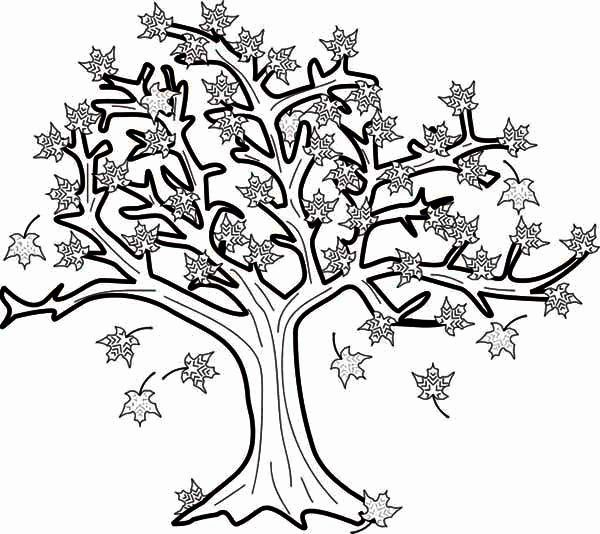 Maple Leaves Coloring Page Lovely 19 Best Icolor Little Kids Autumn Images On Pinterest Leaf Coloring Page Tree Coloring Page Leaf Coloring