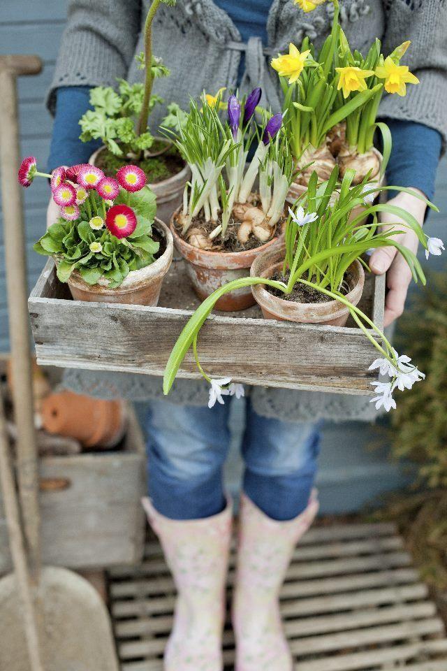 Vinkit kevätpihan kukka-asetelmiin | Unelmien Talo&Koti Kuva ja teksti: Minna Mercke Schmidt