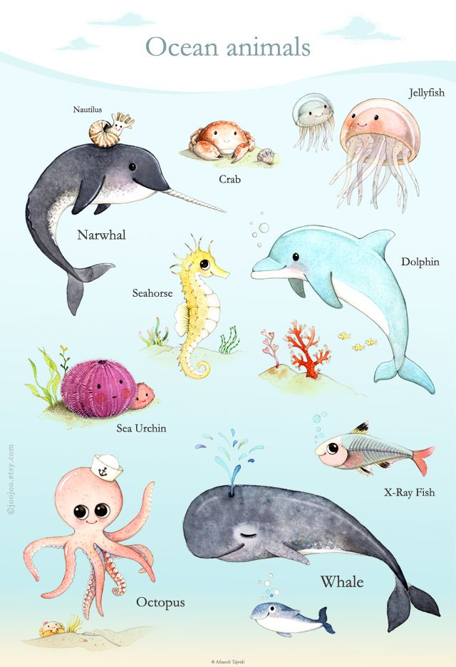 https://flic.kr/p/siBahP | Ocean animals poster + Free shipping | Blogged here