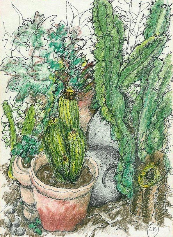 Cactus Garden - Liz Brown - Colored Pencil and Ink