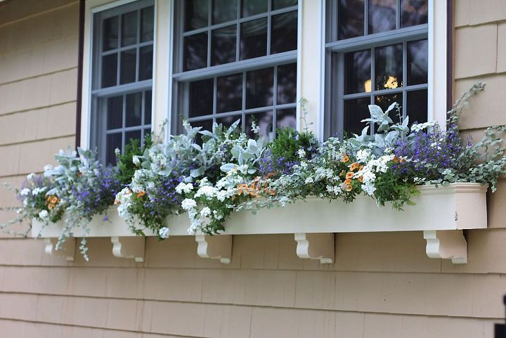Examples of Window Boxes: Summer window box-full sun