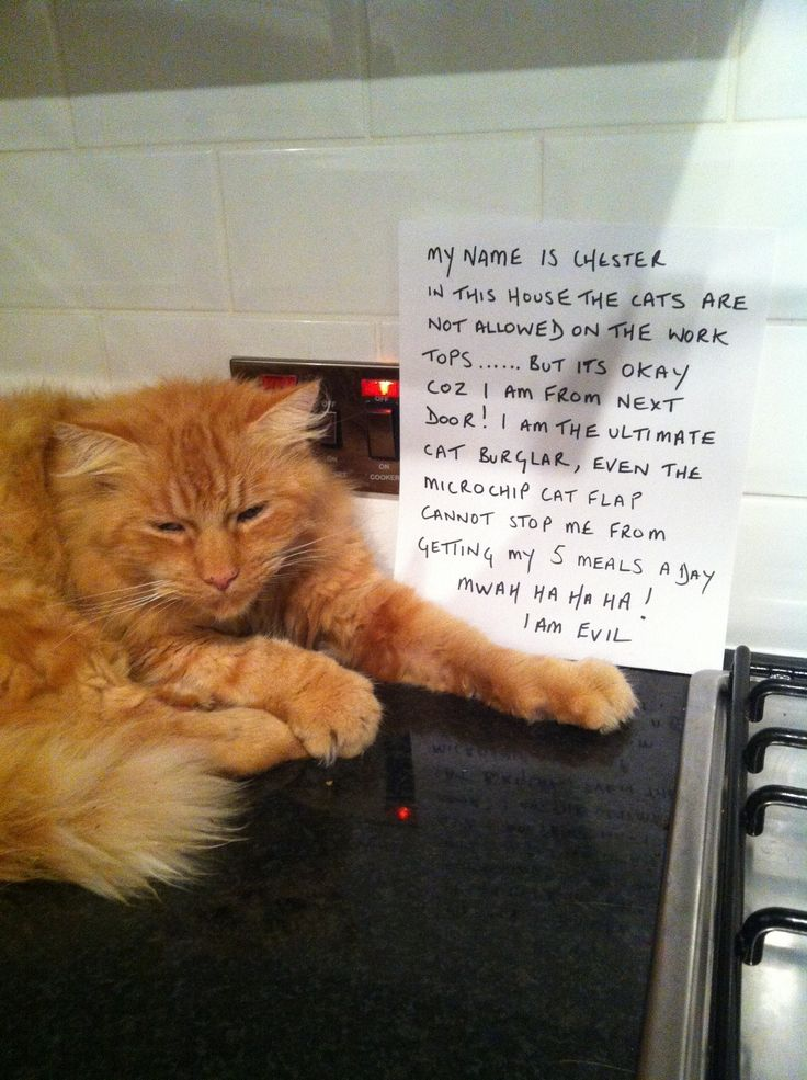 CAT FRIDAY: Cat Shaming