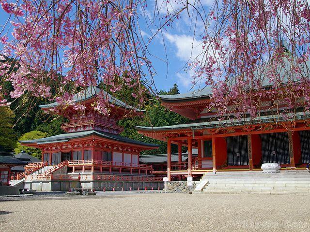 桜と比叡山延暦寺 (Enryaku-ji with Cherry Blossoms)