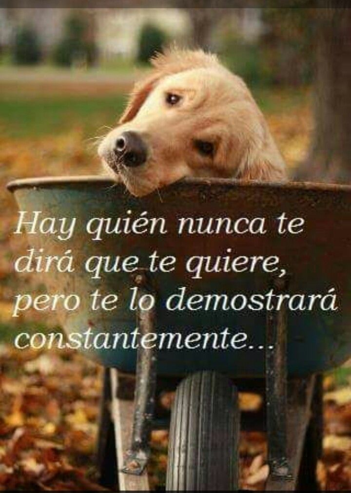 Amor Incondicional Perros Frases Animales Frases Y Amor