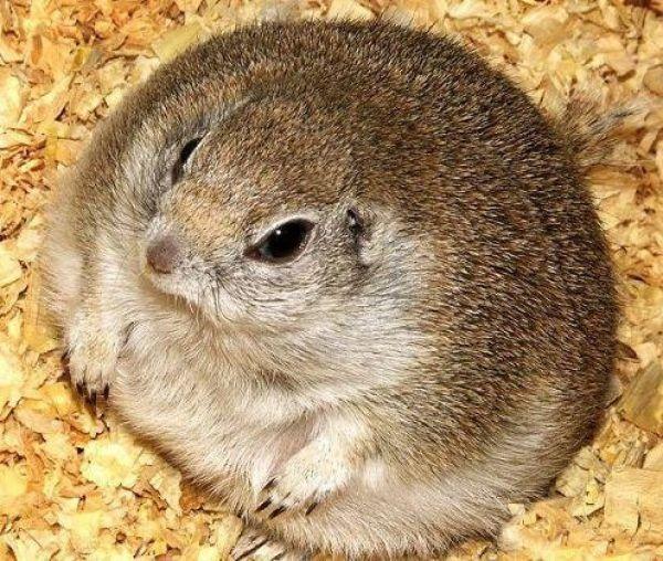 Fat Animals   Funny Fat Animals 26 - FunnyPica.com