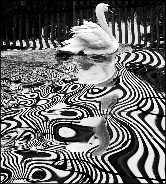 Psychedelic Swimmer