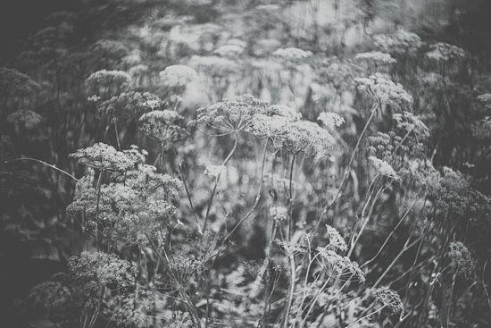 Gras grey by MalgoS
