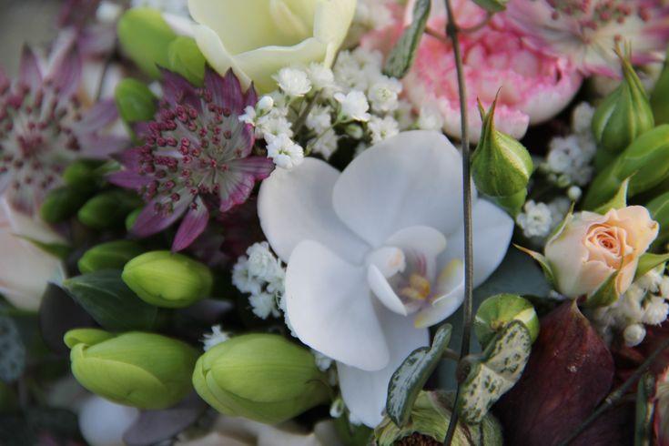 Oncidium Orchidee | Orchideen | Pinterest | Flora