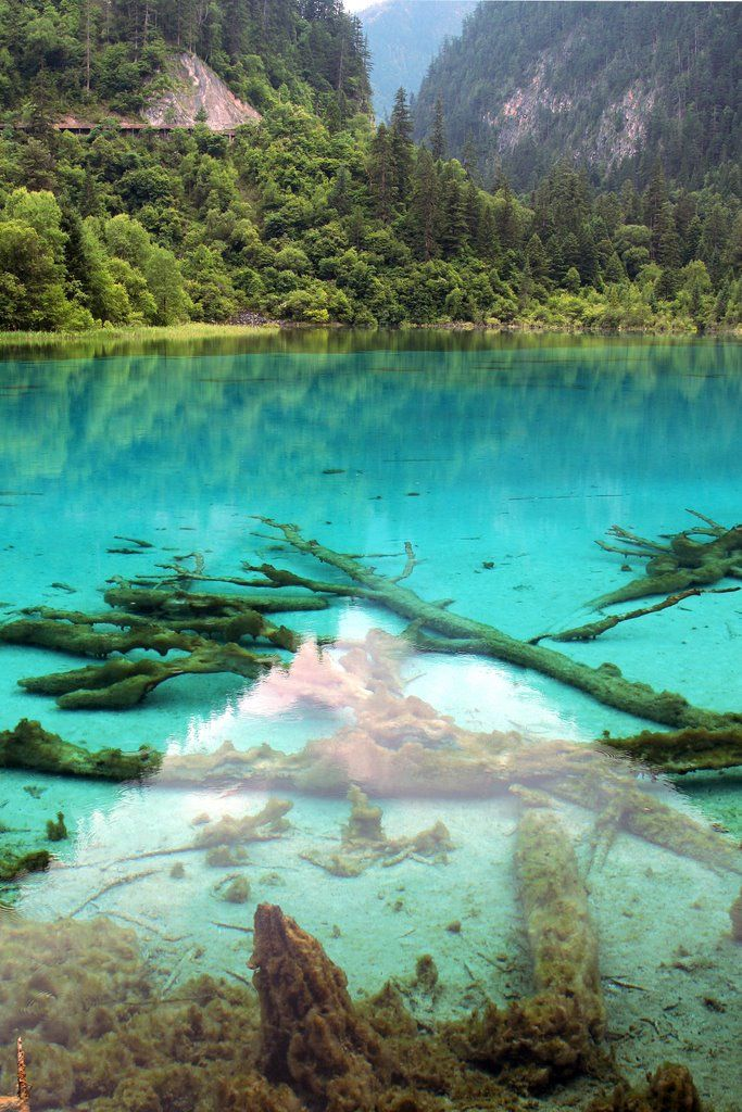 Calcified trees in the blue water of Wuhua Hai ('Many-Colored Lake') in Jiuzhaigou (九寨沟), Sichuan Province, China