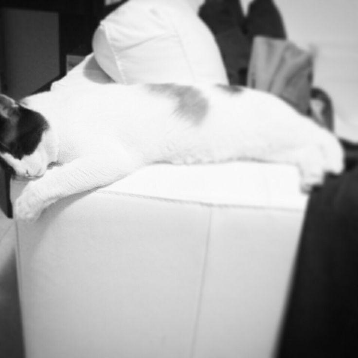 #Goku #cat #sleep #gatto #dormire