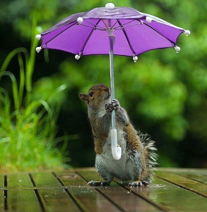 Картинка с добрым дождливым утром и хорошим настроением
