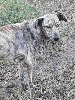 Tiere in Not - Seite:Hunde aus Rumänien