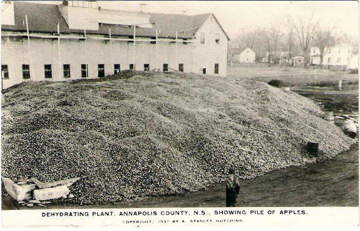 Dehydrating Apple Plant, Annapolis County, Nova Scotia