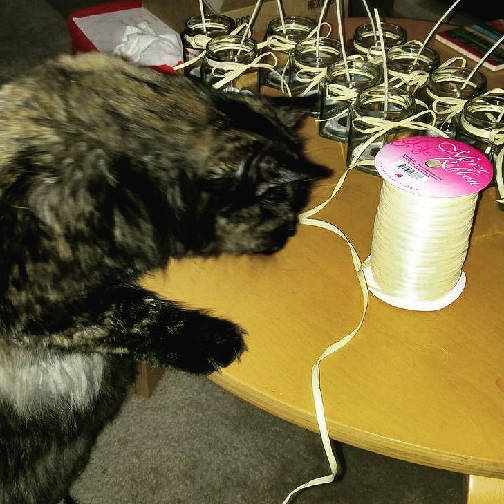 Office Assistant getting into the decorating of candles. All hands I mean paws on the deck to get the product out...#vegan #homemade #soy #scentedcandles #soywax #candles #handpoured #eco-friendly #smallbusiness #veggie #cruelty-free #noanimaltesting #madeintheus #cats #catsofinstagram #holiday #gift