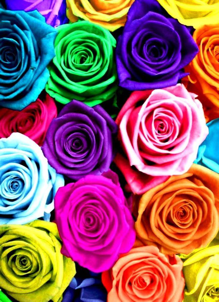 #Rainbow #colors #roses flowers ToniK ❖de l'arc-en-ciel❖❶