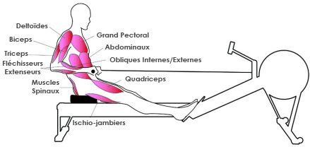muscles-rameur-4