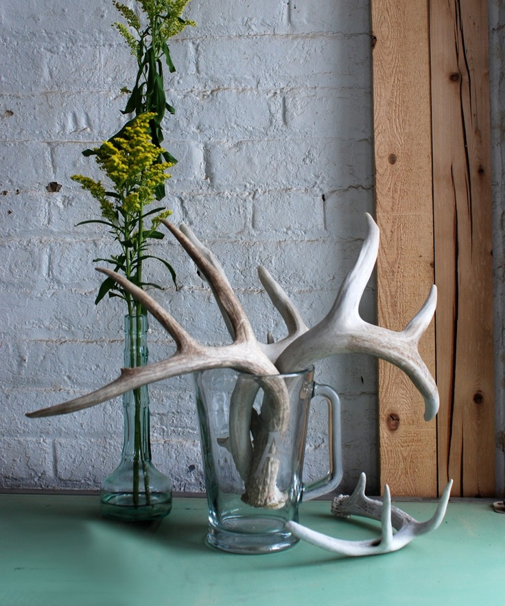 17 best images about all things antlers on pinterest for Deer antler craft ideas