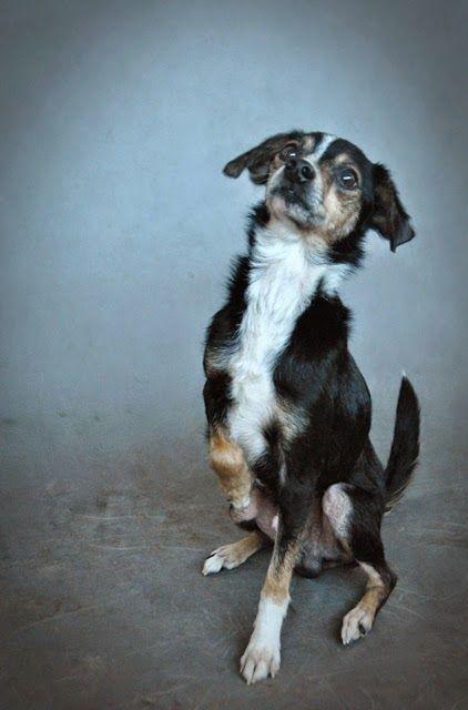 Alvin #pies #dog #doadopcji #adopt #pet #polska #poland #pomoc #kundelki #schronisko #pokochaj #happyend #shelter #help #foster