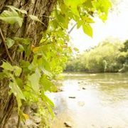 A Home Remedy for How to Kill Poison Ivy & Oak | eHow