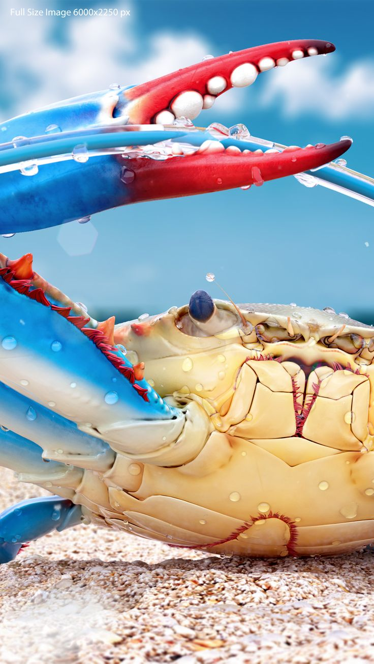 "It's 3d, by Pavel Kondratenko - ""Blue Crab."" Visit the ZBrushCentral thread for details about this colorful illustration and more close-ups. http://zbru.sh/fs #ZBrush"