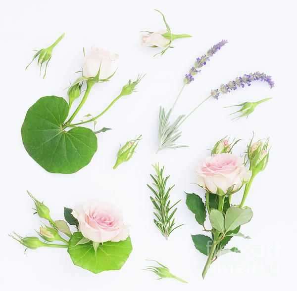 Garden #Flowers Symphony by #AnastasyYarmolovichPhotography #nature