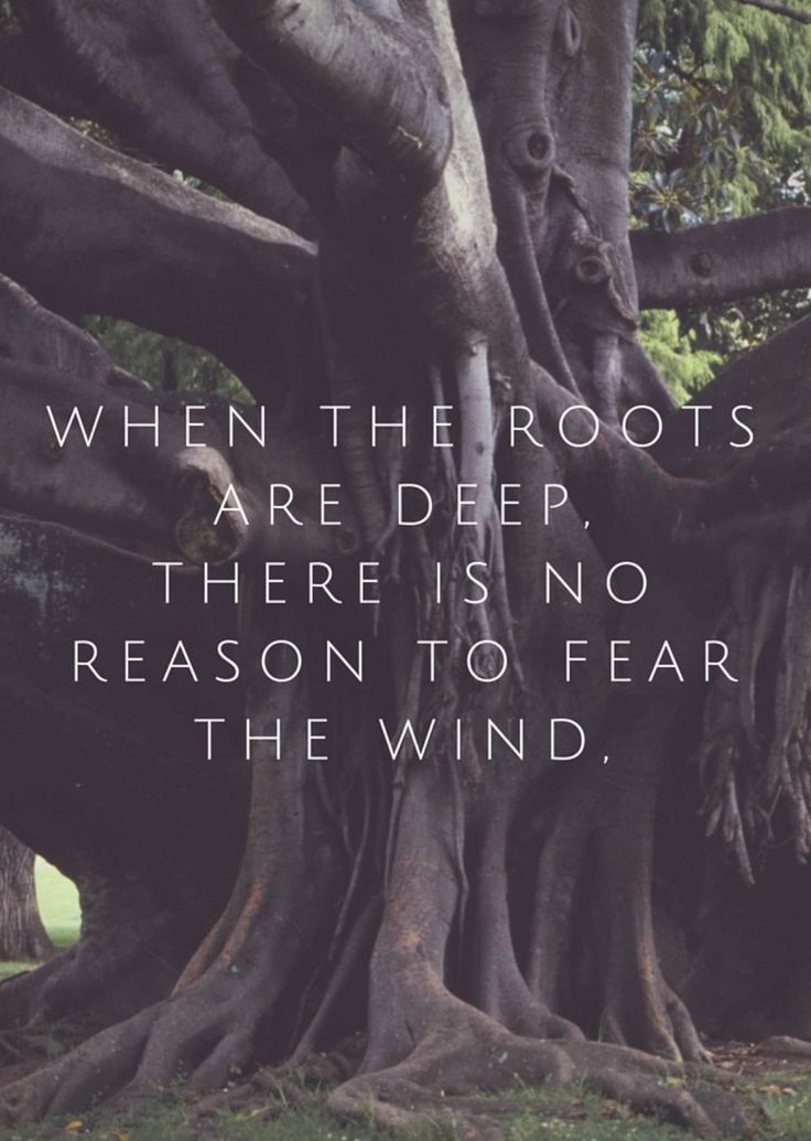 When the roots are deep there is no reason to fear the wind.  Inspiring yoga quotes.