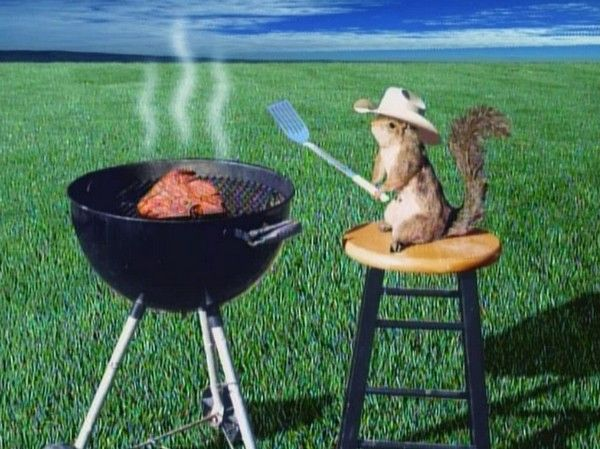 4th of July Cute Animals | Squirrle cookout | Animals ...