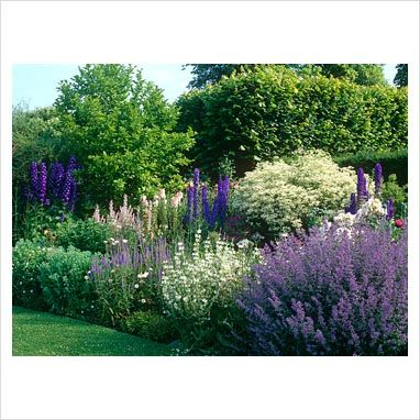 Herbaceous border with pink, blue and white colour scheme. Salvia sclarea var. turkestanica, Clematis recta, Nepeta 'Six Hills Giant', Delphiniums, Veronica spictum, Magnolia x loebneri.