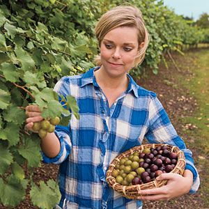 Muscadines 101    Native to Southern soil, these great-for-you grapes are a must-grow.