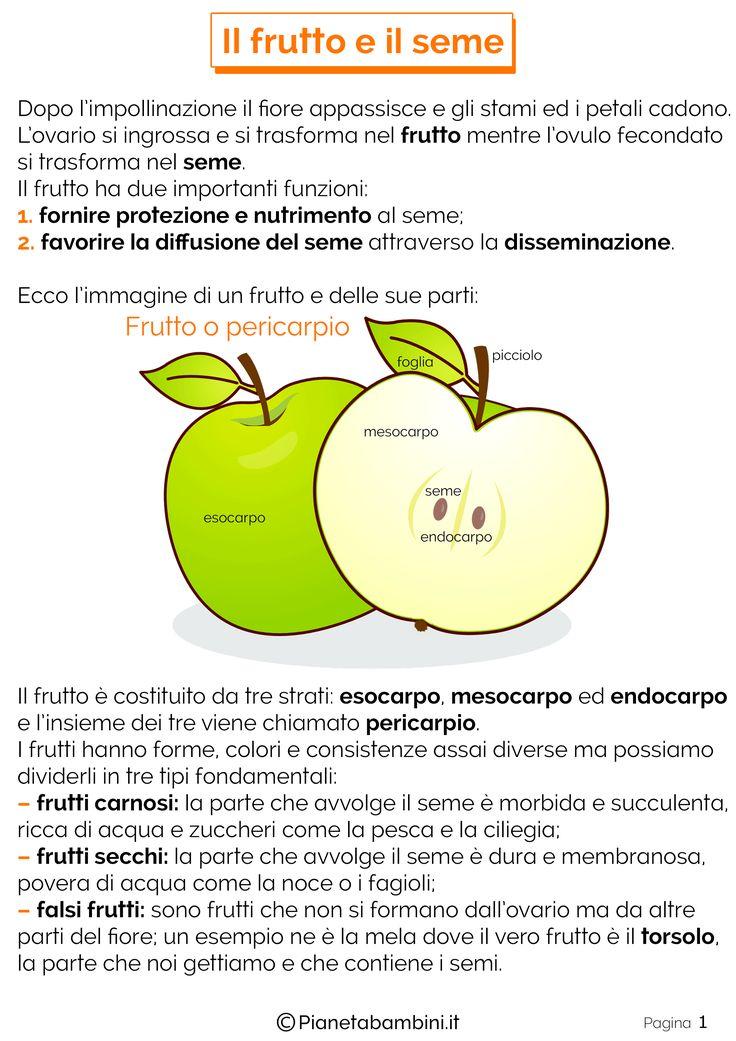 Oltre 25 fantastiche idee su alberi da frutto per giardino - Calendario trattamenti piante da frutto ...