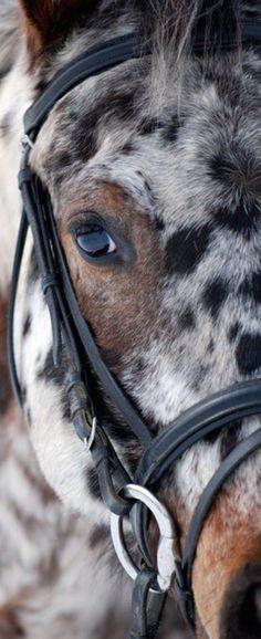 La pureza del caballo