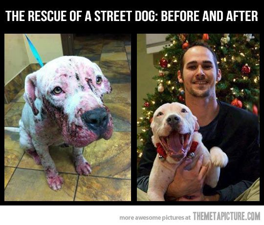 The rescue of a street dog…these always make me so sad, but also very happy! Luckily the sad days are gone and the good ones are ahead!