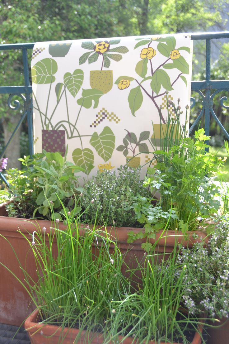 New urban gardening and a lovely wallpaper our balcony on a wonderful sunday morning in the