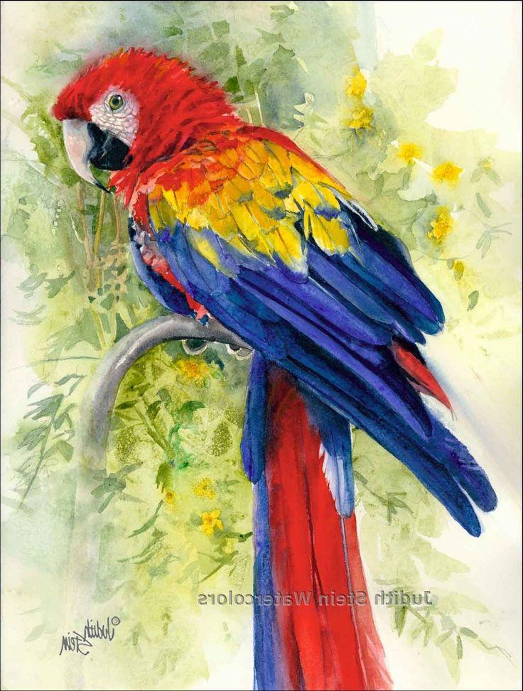 Watercolor macaw parrot   Fine art   Pinterest ...