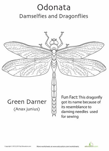 17 best Damselfly images on Pinterest
